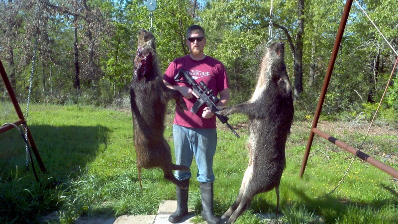 Hog hunts in Texas
